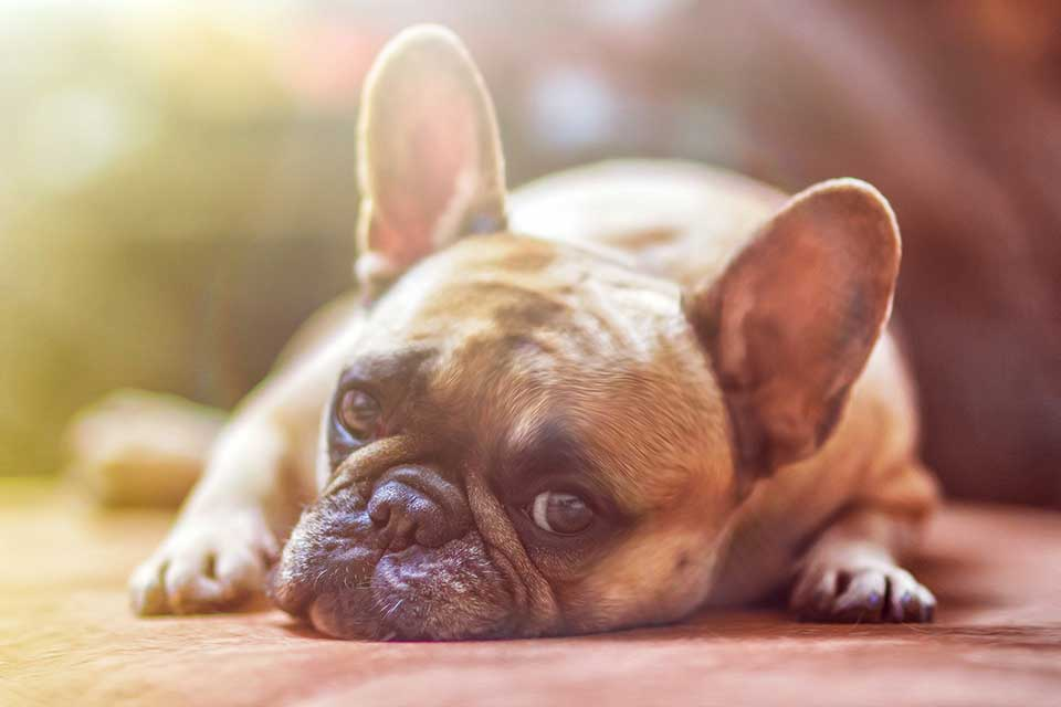 15 Tips for Beating Laziness